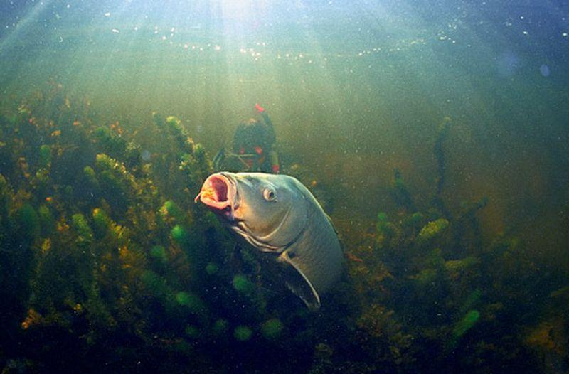 Подводная охота. Доступнее, чем вам кажется