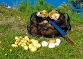 Суп и жаркое из грибов