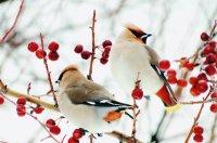 Увлекательная зимняя фотоохота на пернатых
