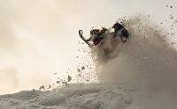 Хакасию уже в третий раз посетил Крис Бурандт со своей школой вождения снегоходов